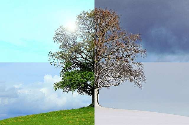 a tree with a different look during each of the seasons - which season is better for moving