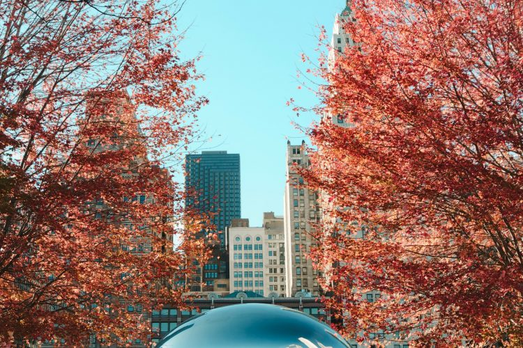 autumn view of chicago monument