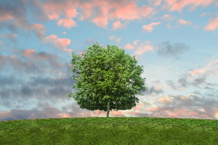 Tips to make your move eco-friendly
