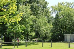 A green lush area with people