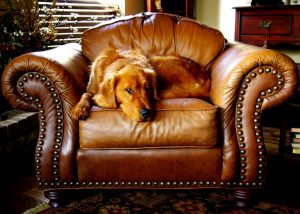 A dog sitting in a leather chair